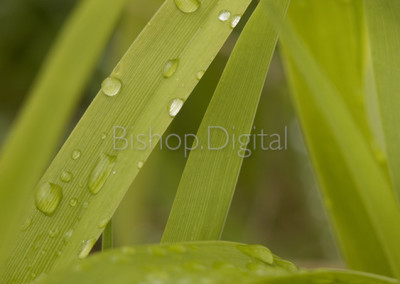 Plant with Water on Leaf