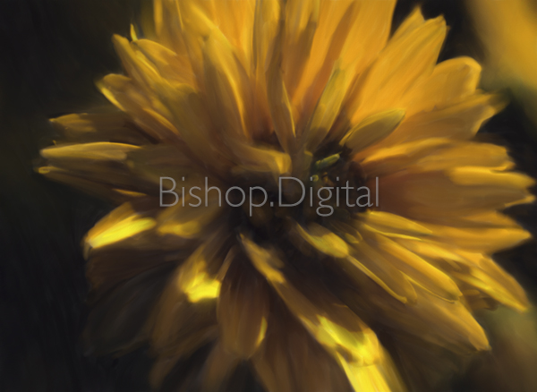 Yellow Flower Painted